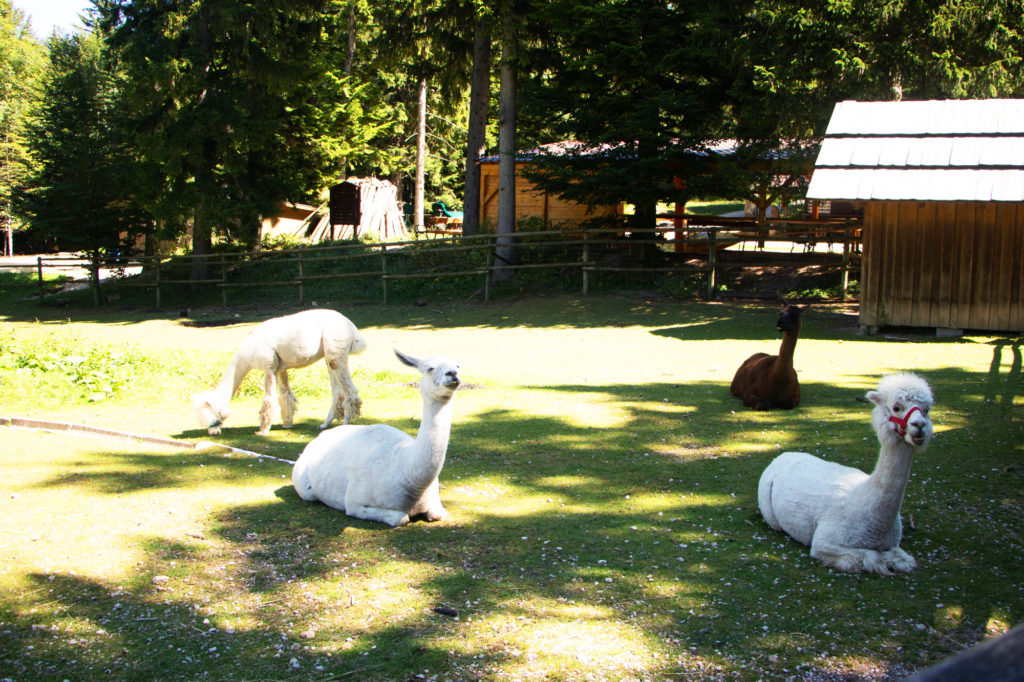 Hohe Wand petting ZOO